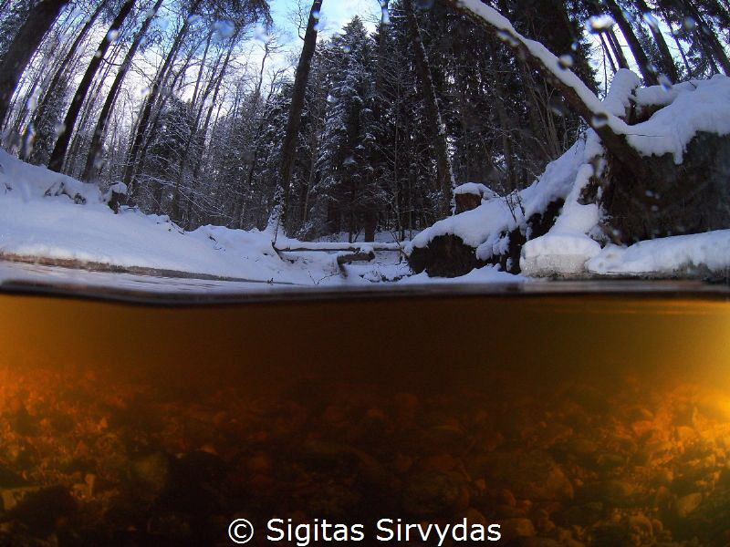 Forest stream in the winter by Sigitas Sirvydas