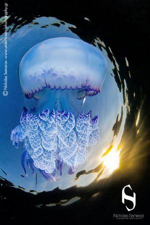 "Τhe last rays. Τomorrow is a new day. ""Rizostoma pulmo"". by Nicholas Samaras"