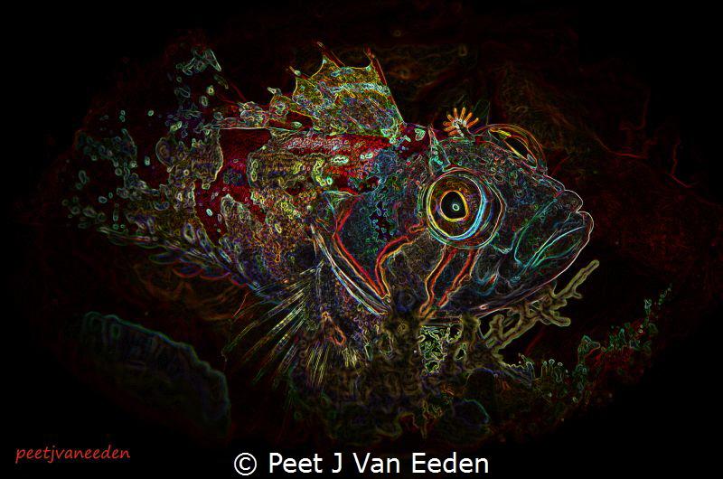 Creative Image of a Klipvis by Peet J Van Eeden