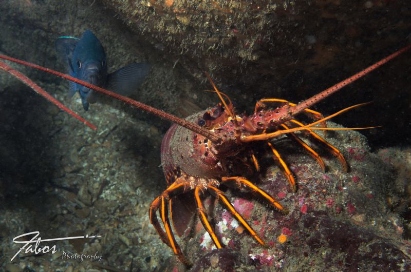 Lobster and Fish