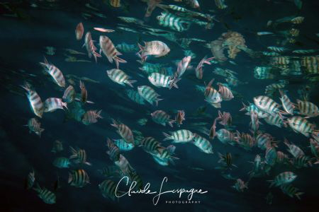 School of ... by Claude Lespagne