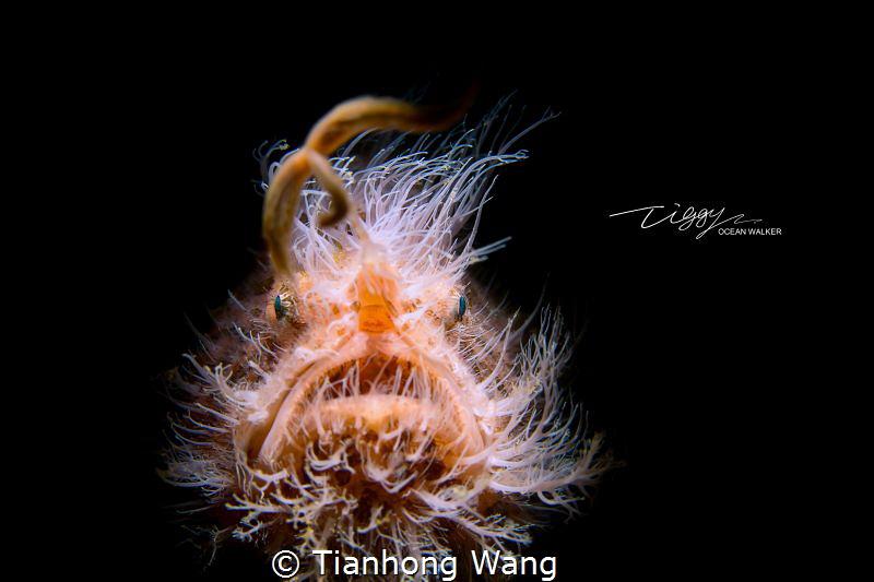 Stunned by Tianhong Wang
