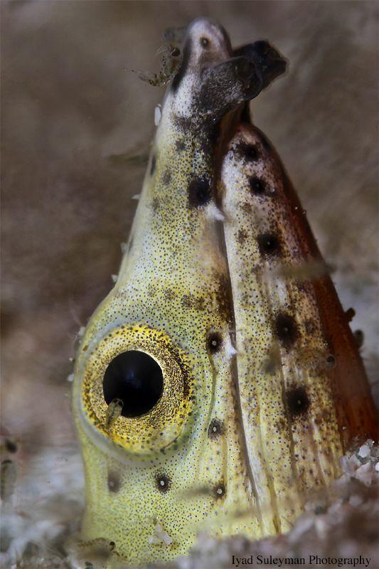 Snake Eel by Iyad Suleyman