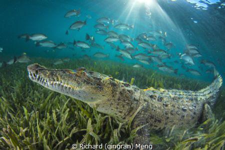 Croc's world by Richard (qingran) Meng