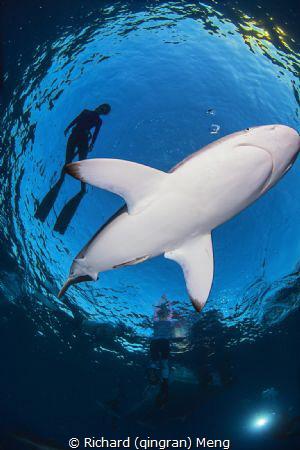 Shark dancer by Richard (qingran) Meng