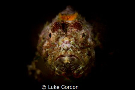 Scorpaenopsis macrochir portrait by Luke Gordon
