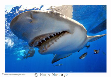 Shark picture taken on Jupiter, FL with Nikon D300-Hugyfo... by Hugo Masaryk