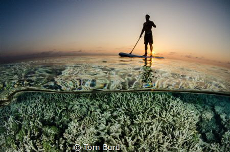 This photo was taken on a house reef in the Maldives, in ... by Tom Burd