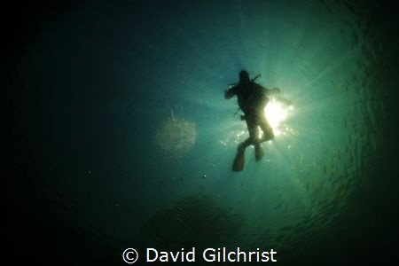 Quarry Diver by David Gilchrist