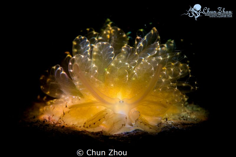 First time to see and have to capture its beauty by Chun Zhou