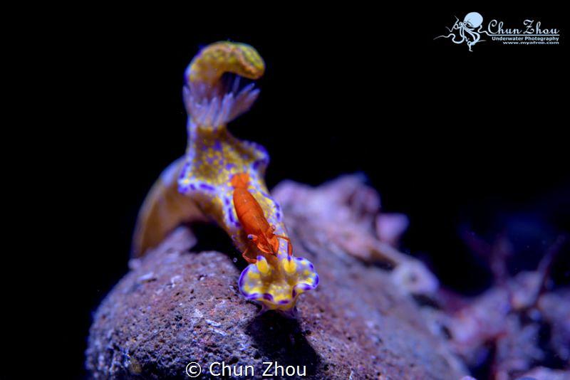 Together by Chun Zhou