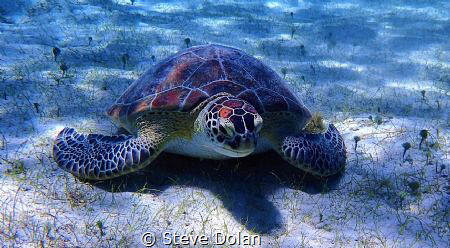 """Hey Dude"". This was the first Sea Turtle I ever encounte... by Steve Dolan"