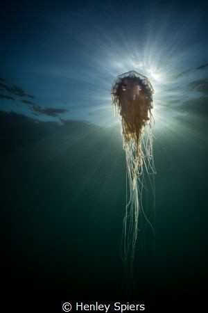Jelly Sunburst by Henley Spiers