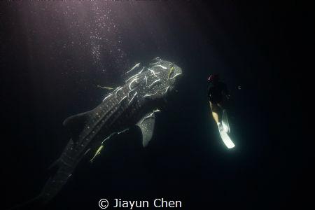 Nice to meet you! by Jiayun Chen