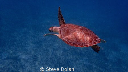 """Peaceful"". Following a Green Sea Turtle swimming slowly ... by Steve Dolan"