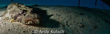 Crocodilefish by Andy Kutsch