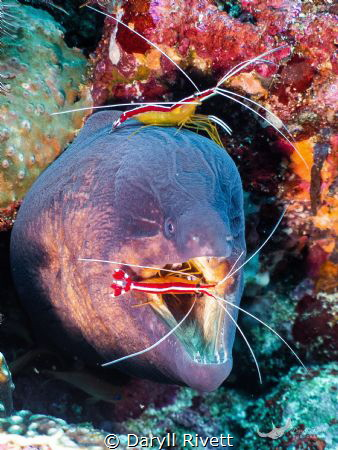 Diving of the Island of Pulau Weh, Banda Aceh, found gian... by Daryll Rivett