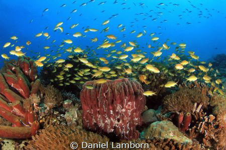 The shallow parts around Pescador Island have some really... by Daniel Lamborn