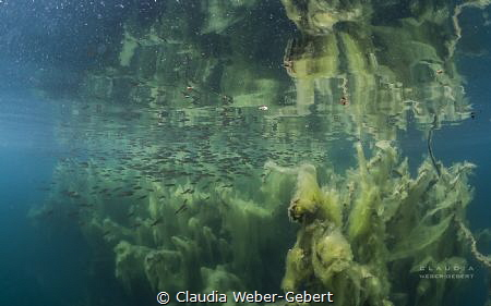 just an illusion?..... freshwater impressions by Claudia Weber-Gebert
