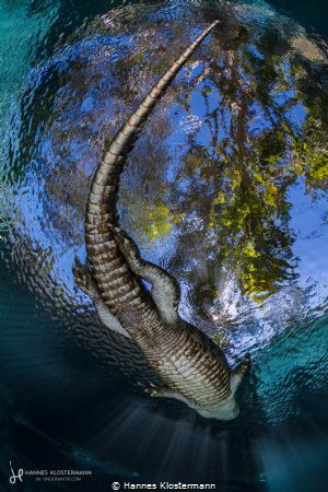 Godzilla by Hannes Klostermann