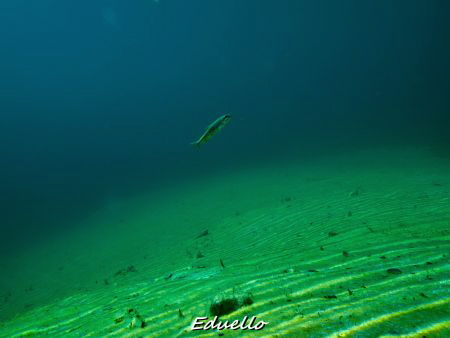 Just a view fish passing by... by Eduard Bello