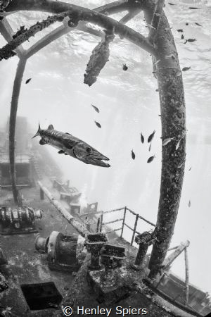 Barracuda on a Shipwreck by Henley Spiers