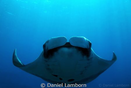 Amazing Manta encounter at Caño Island, on the Pacific si... by Daniel Lamborn