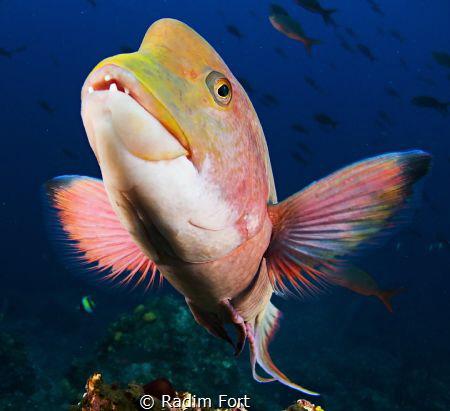 Pozujici ryba by Radim Fort