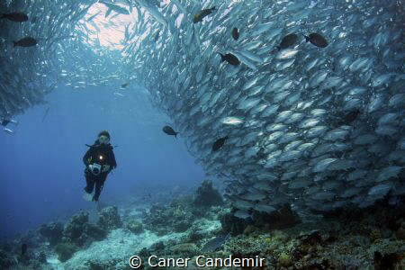 Underwater Photographer by Caner Candemir
