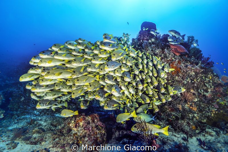 Sweet lips . Raja Ampat . Cape Kri Nikon D800E , 16mm , ... by Marchione Giacomo