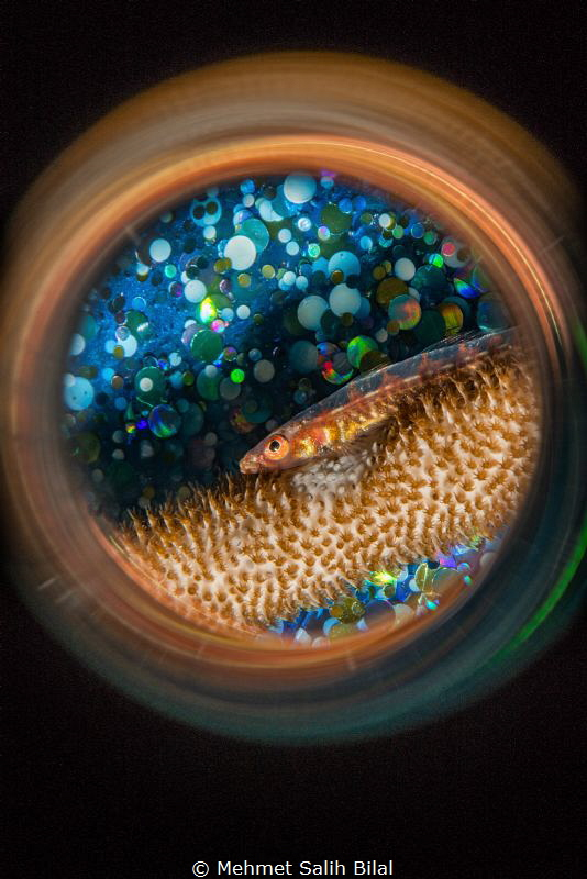 Wire coral goby with blue bubble background and magic tub... by Mehmet Salih Bilal