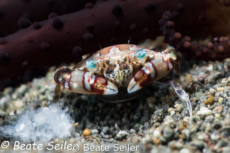 Crab by Beate Seiler