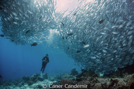Jackfishes and my best model :) by Caner Candemir