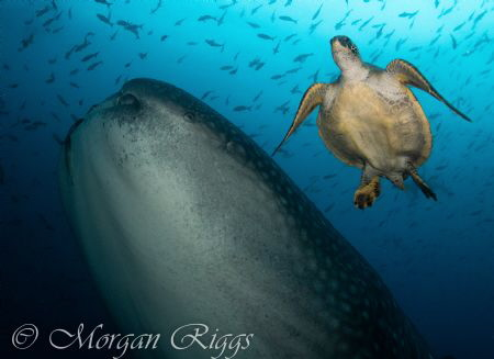 I found these two to make an excellent underwater crime f... by Morgan Riggs
