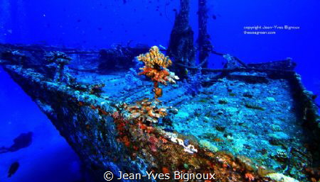 Emily and Water Lilly Shipwreck .Mauritius by Jean-Yves Bignoux