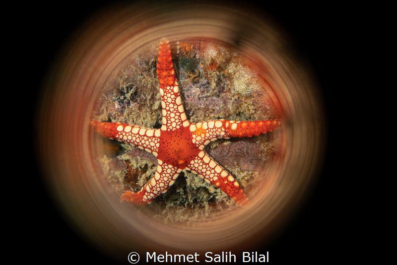 Fromia monilis. by Mehmet Salih Bilal