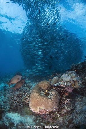 Sipadan marine life by Caner Candemir