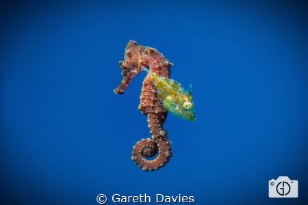 Found these two floating below the dive boat while I was ... by Gareth Davies