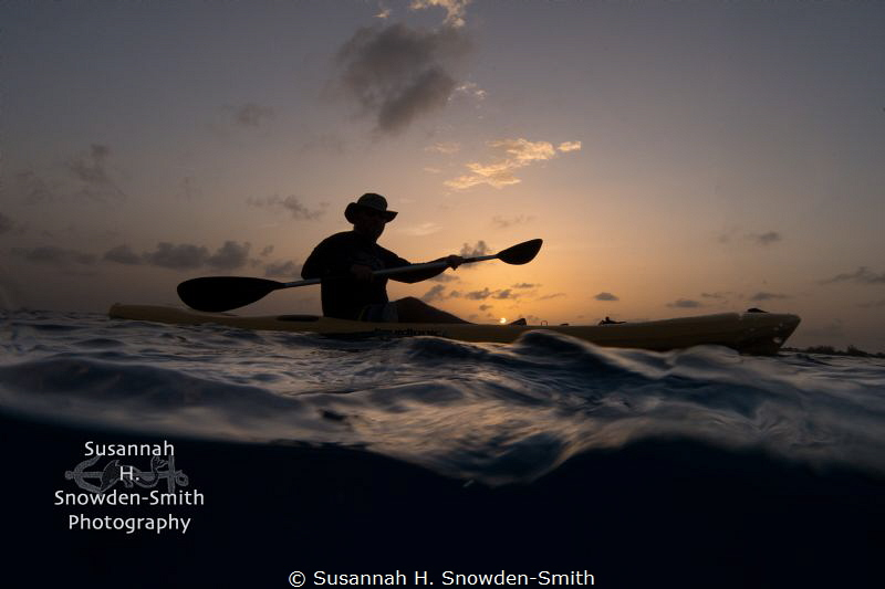 """""""Searching For Mating Turtles At Sunset"""" - When the green... by Susannah H. Snowden-Smith"""