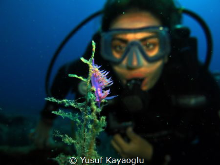 Nudibranch in Bodrum by Yusuf Kayaoğlu