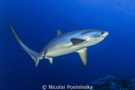 Delusions encounter with a drescher shark