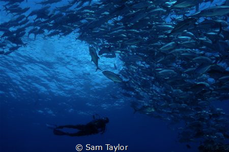 Kiddi, local guide amongst the Jacks Kimbe bay PNG by Sam Taylor