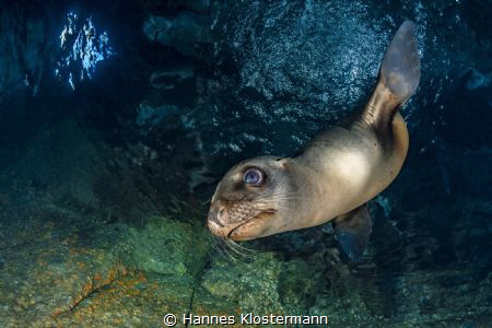 A playful sea lion in a small cavern in Mexico by Hannes Klostermann