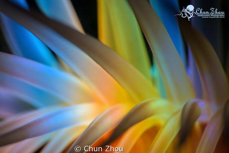 7 Colors by Chun Zhou