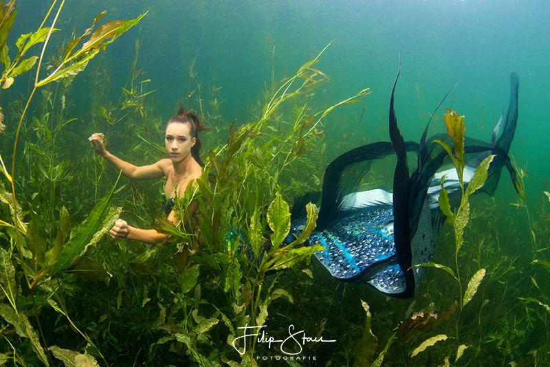 Mermaid Céline @ the pond of Ekeren, Belgium. by Filip Staes