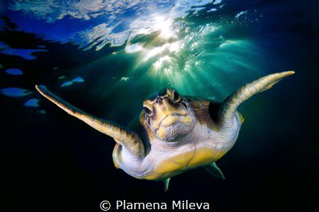 Turtle portrait by Plamena Mileva