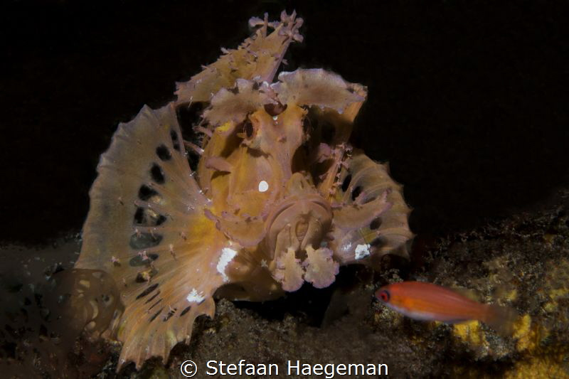 Rhinophia vs his meal. Only 2 people in the world know if... by Stefaan Haegeman