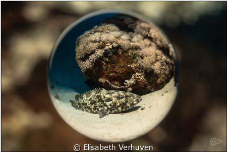 Through the ball! by Elisabeth Verhuven