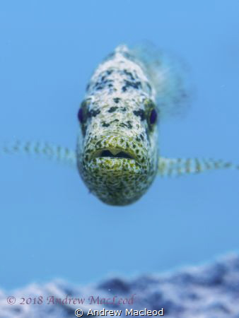 Not one of my best photos, but an unusual dive site! by Andrew Macleod