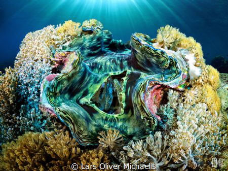 Giant Clam